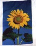 570_sunflower.jpg
